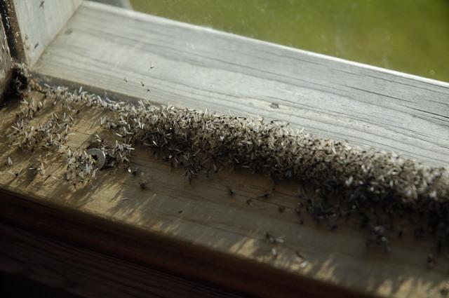 moucheron cuisine cuisine insecticide produit anti. Black Bedroom Furniture Sets. Home Design Ideas
